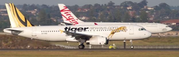 virgin tiger